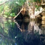 Beautiful entrance to the cenote: you would hardly know it goes down vertically another 65-70ft.