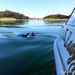 Dolphins at Roberton Island