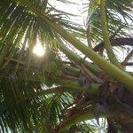 genieten van de schaduw van de palm bomen