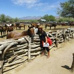 I cavalli, i bei cavalli del Tanque Verde