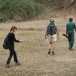 Birds and Turds walking safari