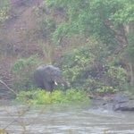 Elephant in the unseasonal rains