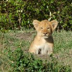 Game Drive visitor