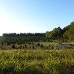 Coleman's Christmas Tree Farm