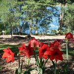 Noosa Botanic Garden