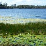 Lake Macdonald and Noosa Botanic Garden