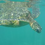Snorkling - amazing experience in the Cove viewing the gentle sea turtles