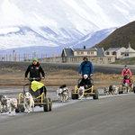 Dog sledding on wheels