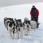 Dog sledding winter time