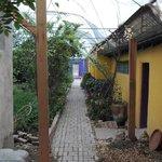 courtyard with garden