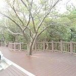 Wooden paved walkways with wooden fencing