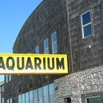Outside the aquarium