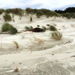 Victory Beach Sea Lion