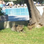 Siesta am Pool