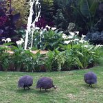 The Lovely Grounds with the Guinea Fowl