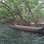 Upon arriving at La Loma you are greeted by a beautiful red mangrove forest