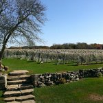 The beautiful vineyard