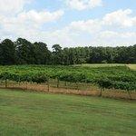 peaceful vineyard