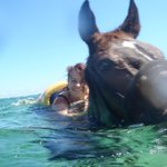 Swimming with my horse