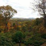 Fall foliage view