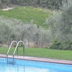 The pool overlooking the olive groves and vineyards.