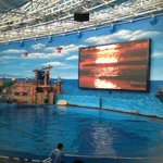 Dolphin Show Arena