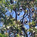 more bats! love those bats
