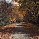 Lehigh Gorge Rail Trail view