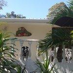 Foto de Hibiscus House Bed & Breakfast