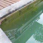 algae in the pool