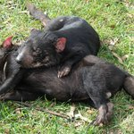 Sleepy devils - so cute!