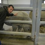 Touching the White Rhino's on the Wildside Tour