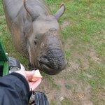 Baby Rhino 10/17/13