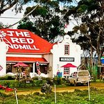 Welcome to the Red Windmill