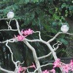 Breakfast birdies