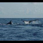 duo de baleines