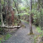 One of the trails down to Kilauea Iki