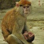 Newborn Patas Monkey