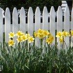 Springtime Along 6A