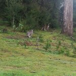 Geff is a great guide. He took us to see some kangaroos at a little secret spot of his.
