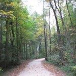 Дорога к отелю через  лес