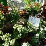 Beautiful display of unusual plants.