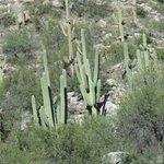 Sonoran Deset at base of mountain