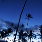 Coconut Trees during predawn hours