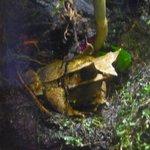 grenouille !