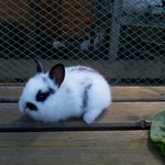 Кролик с мини-фермы