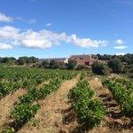 Visite tous les jeudis matin :vignoble Bio  vin excellent il faut y aller !!!