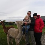 Feeding the Alpacas - Family Experience