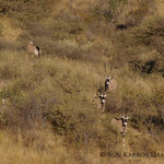 Wildlife @ Daan Viljoen Game Park
