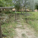 walking up the olive grove